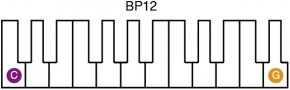 Belleplates BP12 Illustration